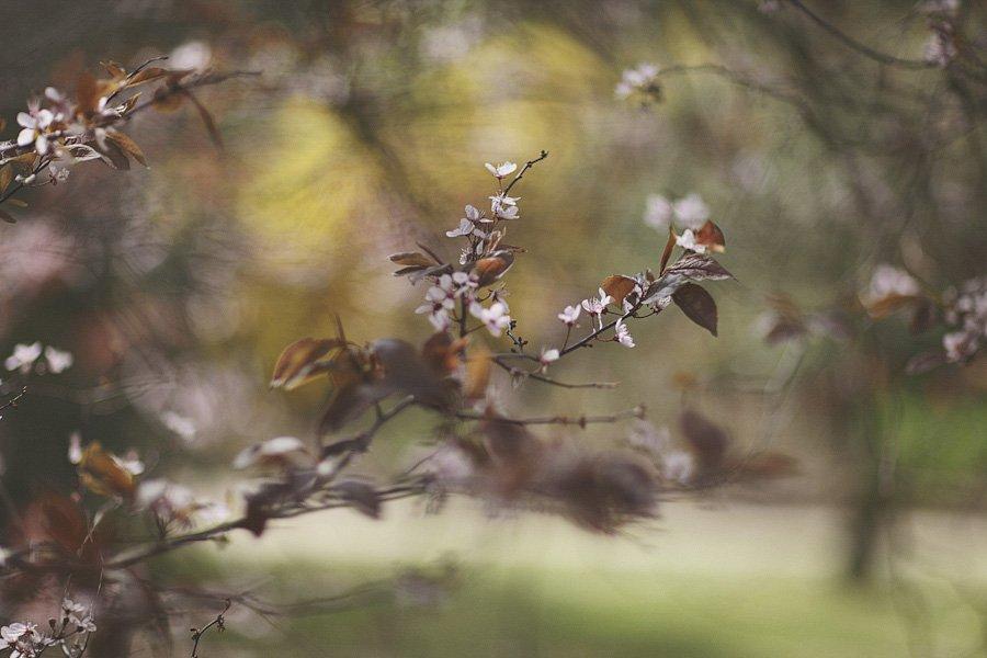 Pocklington and Burnby Hall Gardens Wedding Photography