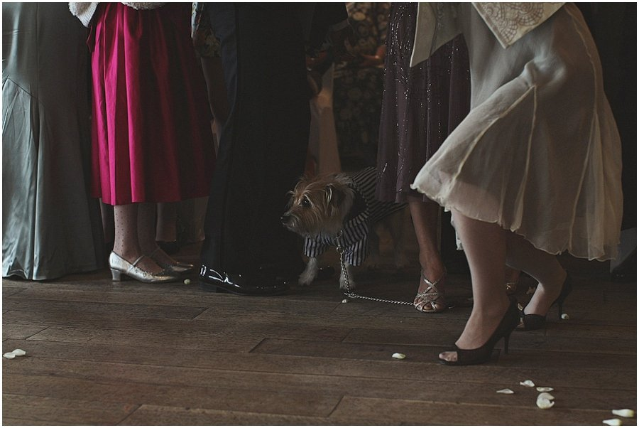 dog in blue and white striped suit at wedding